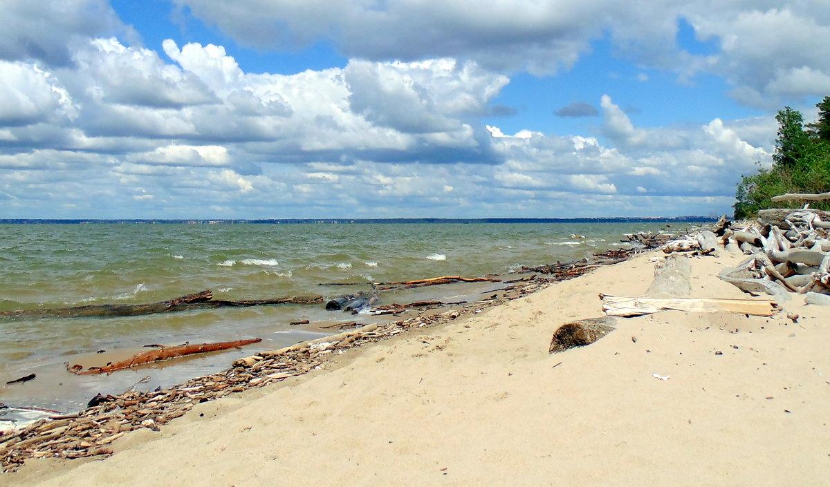 Обское море фото новосибирск