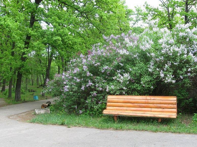 фото Турбаза Золотой ключик Воронеж